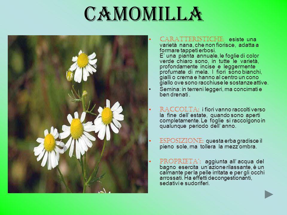 camomilla CARATTERISTICHE : esiste una varietà nana, che non fiorisce, adatta a formare tappeti erbosi. E una pianta annuale, le foglie di color verde