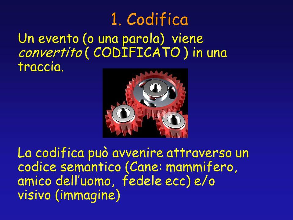 1. Codifica Un evento (o una parola) viene convertito ( CODIFICATO ) in una traccia. La codifica può avvenire attraverso un codice semantico (Cane: ma