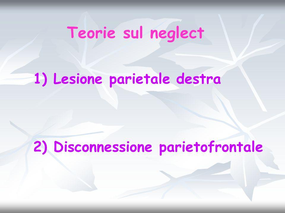 1) Lesione parietale destra 2) Disconnessione parietofrontale Teorie sul neglect
