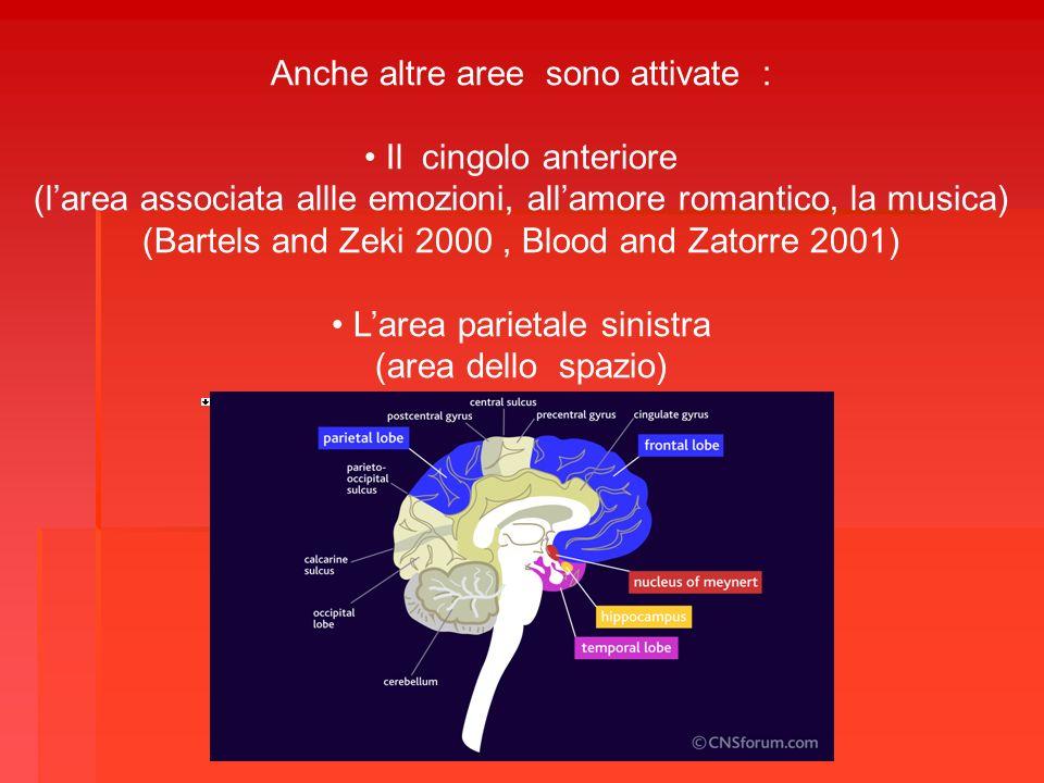 Anche altre aree sono attivate : Il cingolo anteriore (larea associata allle emozioni, allamore romantico, la musica) (Bartels and Zeki 2000, Blood an