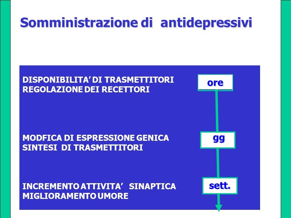 DISPONIBILITA DI TRASMETTITORI REGOLAZIONE DEI RECETTORI MODFICA DI ESPRESSIONE GENICA SINTESI DI TRASMETTITORI INCREMENTO ATTIVITA SINAPTICA MIGLIORA