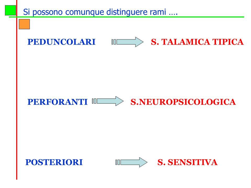 PEDUNCOLARI S. TALAMICA TIPICA PERFORANTI S.NEUROPSICOLOGICA POSTERIORI S. SENSITIVA Si possono comunque distinguere rami ….