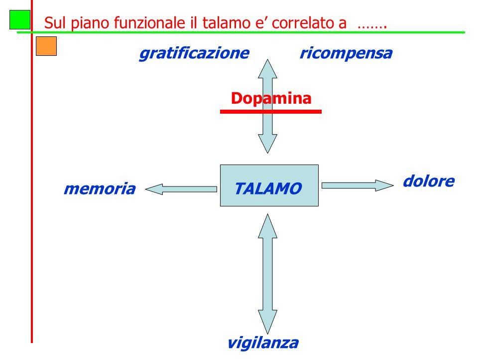 Sul piano funzionale il talamo e correlato a ……. gratificazione ricompensa talamo memoria vigilanza TALAMO dolore Dopamina