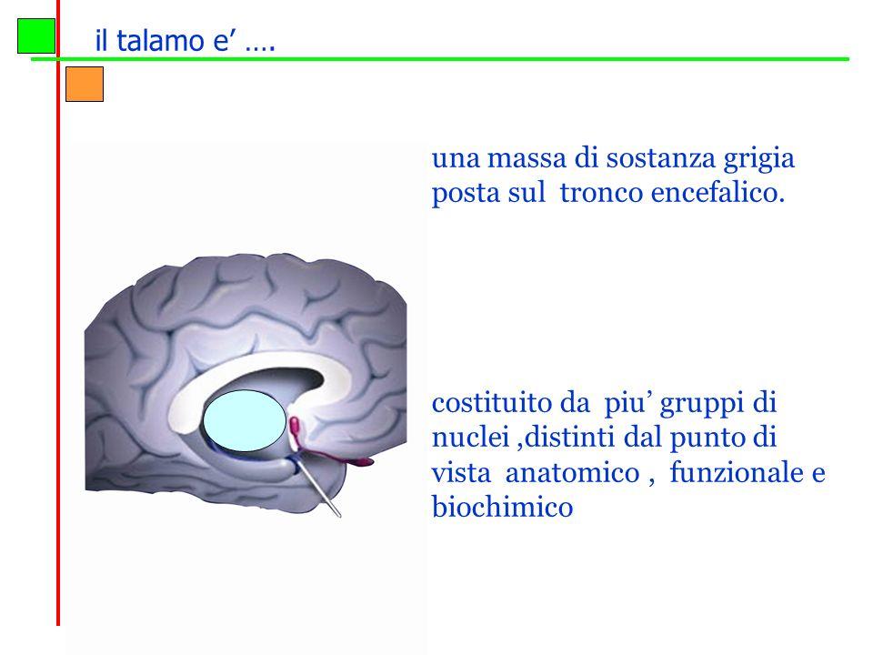 una massa di sostanza grigia posta sul tronco encefalico. costituito da piu gruppi di nuclei,distinti dal punto di vista anatomico, funzionale e bioch