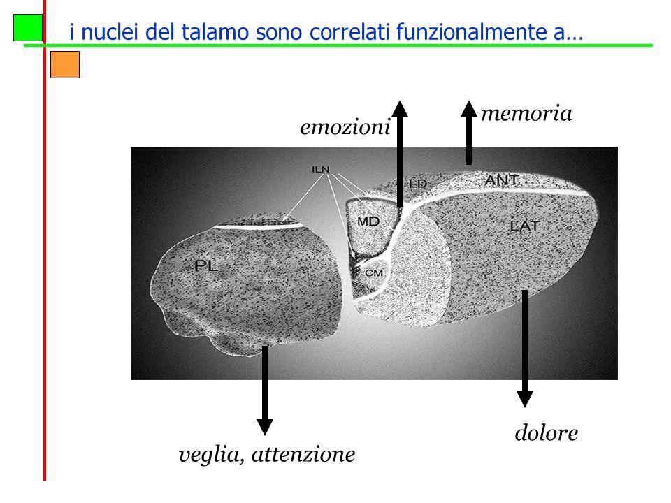 emozioni dolore memoria veglia, attenzione i nuclei del talamo sono correlati funzionalmente a…
