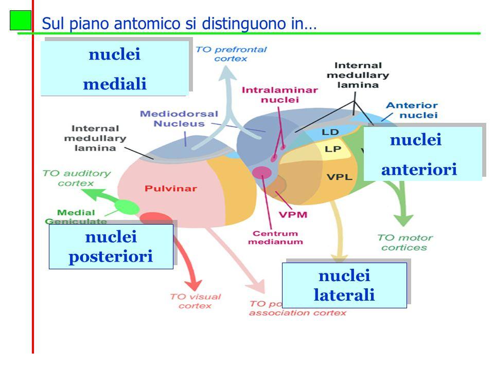 n.Reticolari vigilanza n.Sensoriali afferenze da tutte le sensibilita n.Effettori movimento e linguaggio n.
