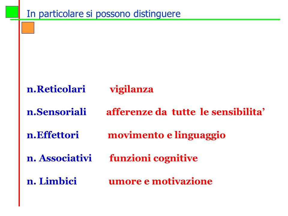 n.Reticolari vigilanza n.Sensoriali afferenze da tutte le sensibilita n.Effettori movimento e linguaggio n. Associativi funzioni cognitive n. Limbici