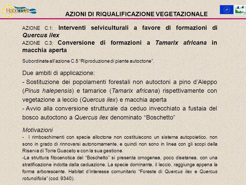 AZIONE C.1: Interventi selviculturali a favore di formazioni di Quercus ilex AZIONE C.3: Conversione di formazioni a Tamarix africana in macchia aperta Subordinate allazione C.5 Riproduzione di piante autoctone.
