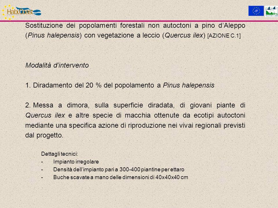 Sostituzione dei popolamenti forestali non autoctoni a pino dAleppo (Pinus halepensis) con vegetazione a leccio (Quercus ilex) [AZIONE C.1] Modalità dintervento 1.