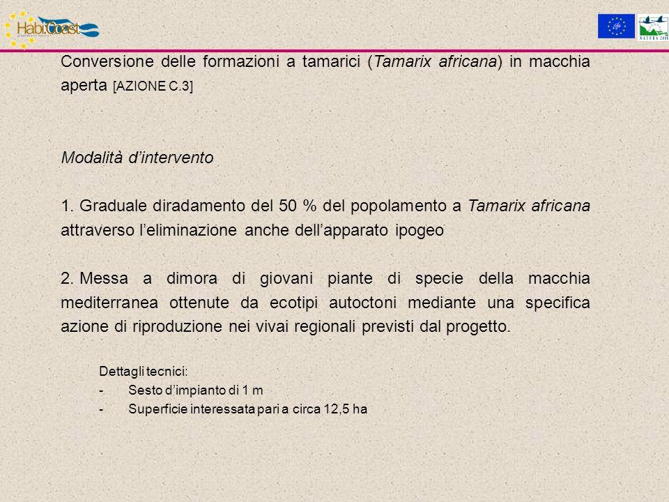 Conversione delle formazioni a tamarici (Tamarix africana) in macchia aperta [AZIONE C.3] Modalità dintervento 1.
