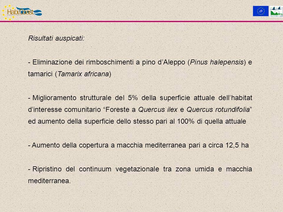 Risultati auspicati: - Eliminazione dei rimboschimenti a pino dAleppo (Pinus halepensis) e tamarici (Tamarix africana) - Miglioramento strutturale del 5% della superficie attuale dellhabitat dinteresse comunitario Foreste a Quercus ilex e Quercus rotundifolia ed aumento della superficie dello stesso pari al 100% di quella attuale - Aumento della copertura a macchia mediterranea pari a circa 12,5 ha - Ripristino del continuum vegetazionale tra zona umida e macchia mediterranea.