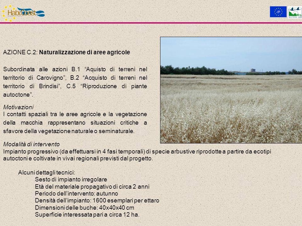 AZIONE C.2: Naturalizzazione di aree agricole Subordinata alle azioni B.1 Aquisto di terreni nel territorio di Carovigno, B.2 Acquisto di terreni nel territorio di Brindisi, C.5 Riproduzione di piante autoctone.