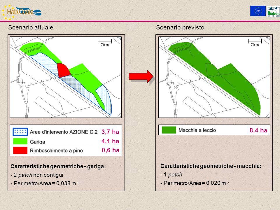 3,7 ha 0,6 ha 4,1 ha 8,4 ha Caratteristiche geometriche - gariga: - 2 patch non contigui - Perimetro/Area = 0,038 m Caratteristiche geometriche - macchia: - 1 patch - Perimetro/Area = 0,020 m 70 m Scenario attualeScenario previsto