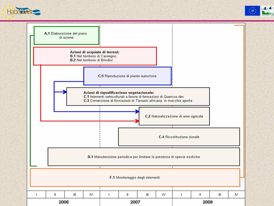 Fase 4 - Reintroduzione in situ del materiale vegetale.
