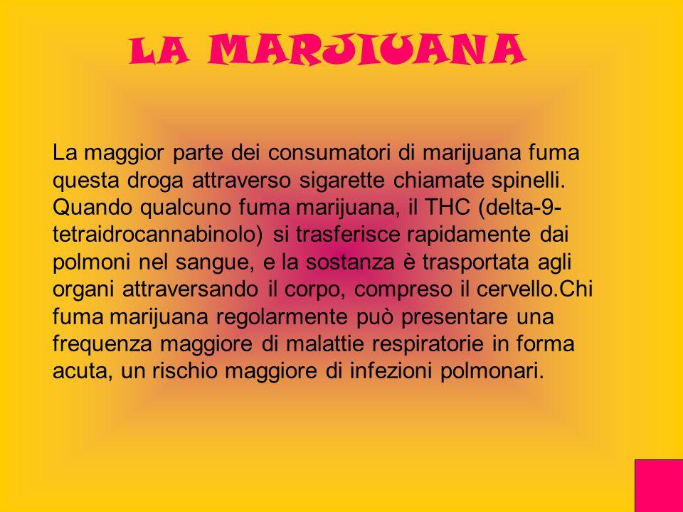 LA MARJIUANA La maggior parte dei consumatori di marijuana fuma questa droga attraverso sigarette chiamate spinelli. Quando qualcuno fuma marijuana, i