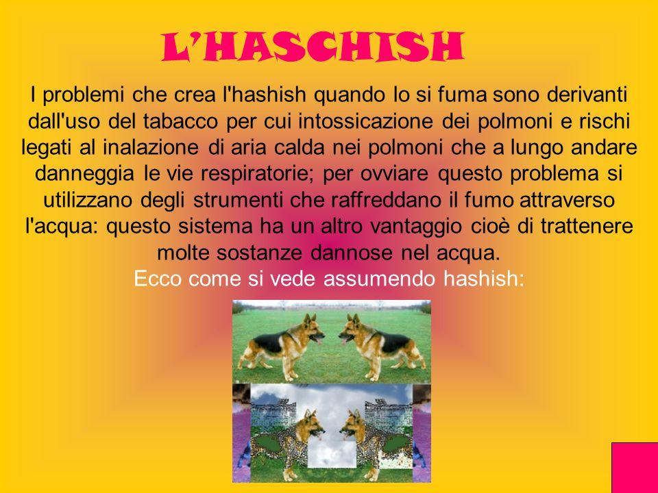 LHASCHISH I problemi che crea l'hashish quando lo si fuma sono derivanti dall'uso del tabacco per cui intossicazione dei polmoni e rischi legati al in