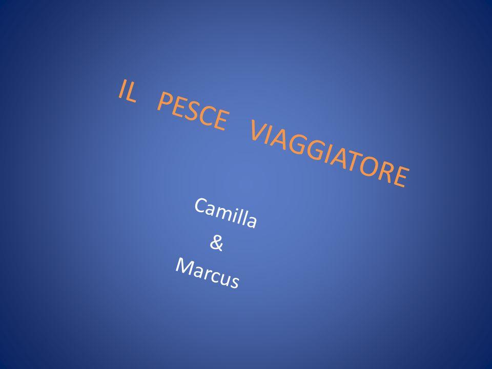 IL PESCE VIAGGIATORE Camilla & Marcus