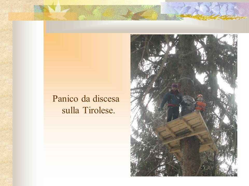 Linteressante scoperta delle risorse del bosco alpino con le guardie forestali.