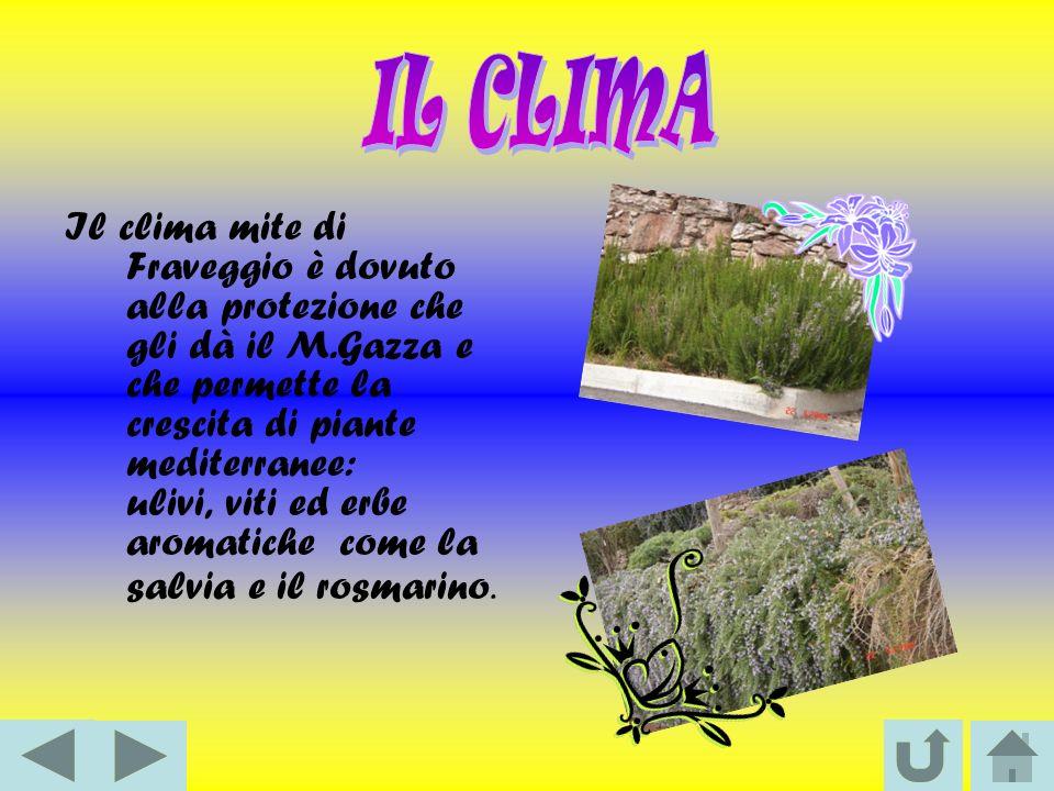 Il clima mite di Fraveggio è dovuto alla protezione che gli dà il M.Gazza e che permette la crescita di piante mediterranee: ulivi, viti ed erbe aromatiche come la salvia e il rosmarino.