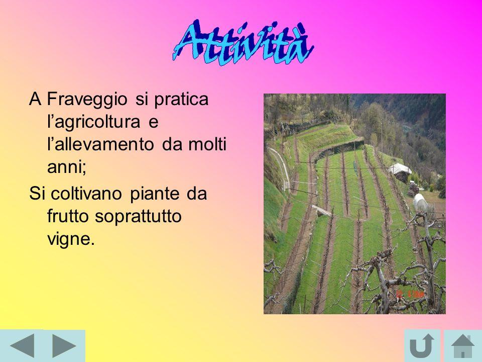 A Fraveggio si pratica lagricoltura e lallevamento da molti anni; Si coltivano piante da frutto soprattutto vigne.