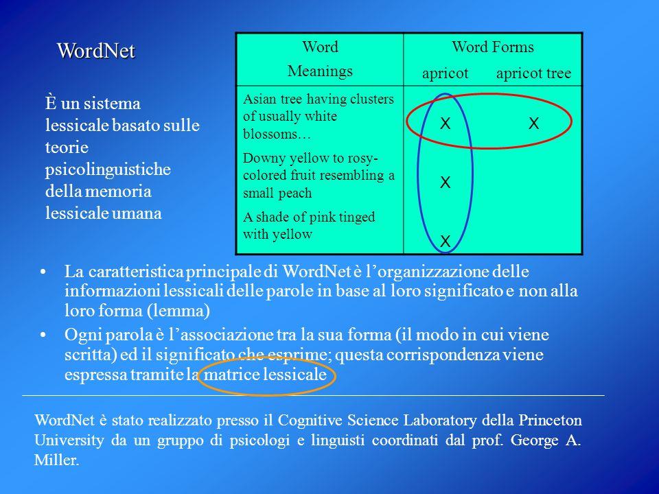 WordNet divide linsieme delle parole in 4 categorie: Nomi Aggettivi Avverbi Verbi Ogni categoria è organizzata in insiemi di sinonimi (synset) che rappresentano un concetto.