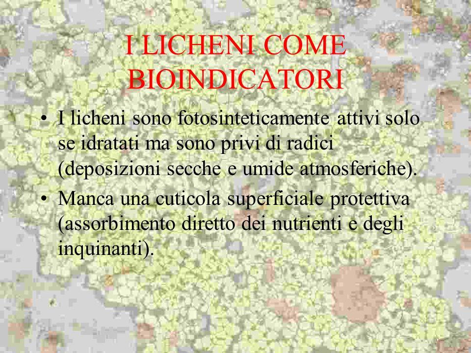 I LICHENI COME BIOINDICATORI I licheni sono fotosinteticamente attivi solo se idratati ma sono privi di radici (deposizioni secche e umide atmosferich