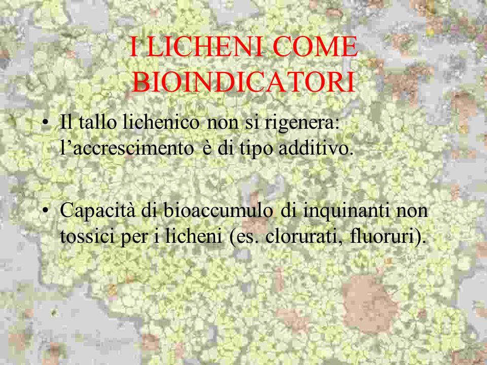 I LICHENI COME BIOINDICATORI Il tallo lichenico non si rigenera: laccrescimento è di tipo additivo. Capacità di bioaccumulo di inquinanti non tossici