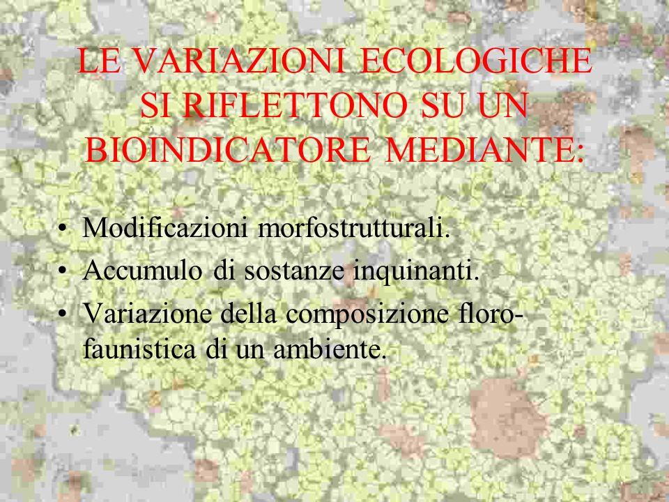 LE VARIAZIONI ECOLOGICHE SI RIFLETTONO SU UN BIOINDICATORE MEDIANTE: Modificazioni morfostrutturali. Accumulo di sostanze inquinanti. Variazione della