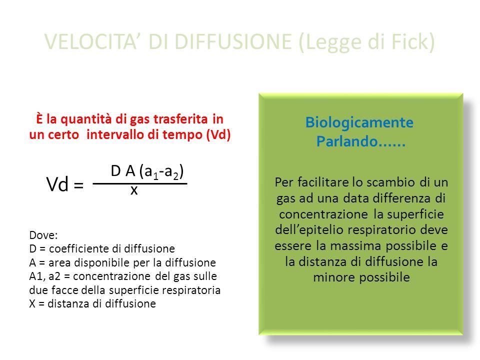 VELOCITA DI DIFFUSIONE (Legge di Fick) È la quantità di gas trasferita in un certo intervallo di tempo (Vd) D A (a 1 -a 2 ) x Dove: D = coefficiente di diffusione A = area disponibile per la diffusione A1, a2 = concentrazione del gas sulle due facce della superficie respiratoria X = distanza di diffusione Per facilitare lo scambio di un gas ad una data differenza di concentrazione la superficie dellepitelio respiratorio deve essere la massima possibile e la distanza di diffusione la minore possibile Vd = Biologicamente Parlando……