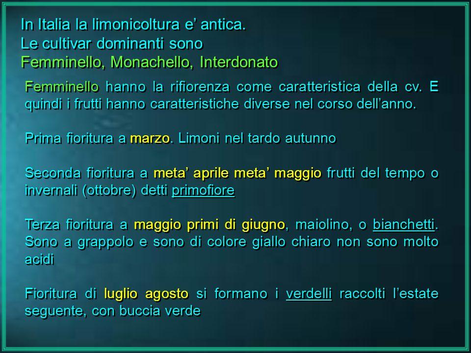 In Italia la limonicoltura e antica. Le cultivar dominanti sono Femminello, Monachello, Interdonato In Italia la limonicoltura e antica. Le cultivar d