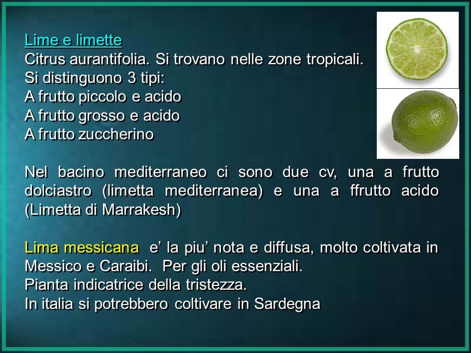 Lime e limette Citrus aurantifolia. Si trovano nelle zone tropicali. Si distinguono 3 tipi: A frutto piccolo e acido A frutto grosso e acido A frutto
