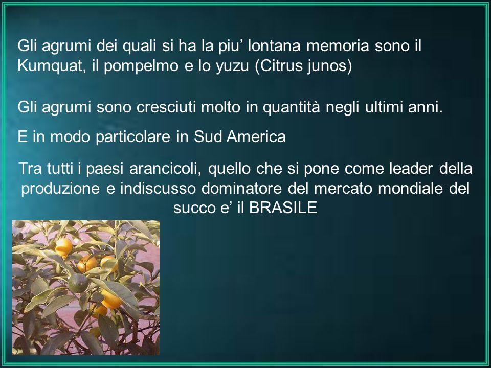Gli agrumi dei quali si ha la piu lontana memoria sono il Kumquat, il pompelmo e lo yuzu (Citrus junos) Gli agrumi sono cresciuti molto in quantità ne