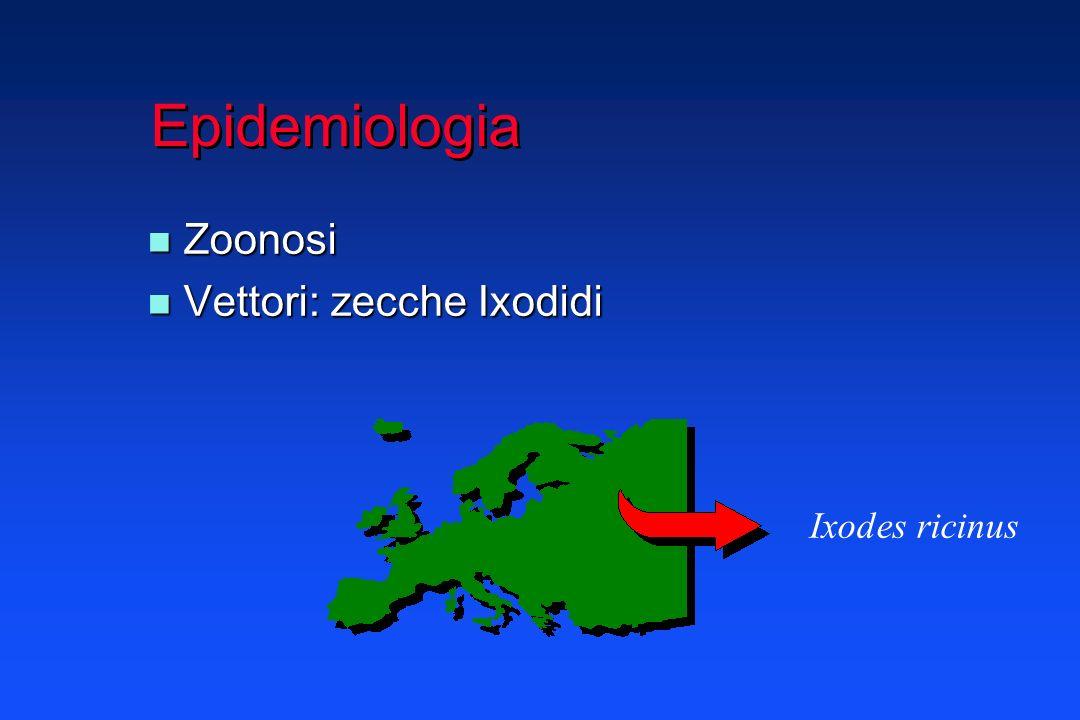 Clinica 3 Stadi infezione localizzata infezione localizzata infezione disseminata infezione disseminata infezione persistente infezione persistente