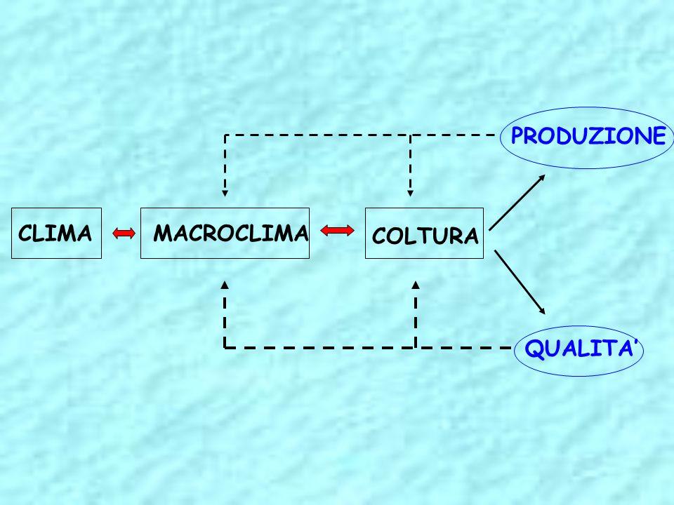 FATTORI AMBIENTALI Umidità relativa Terreno Inquinamento Luce e temperatura elevata luminosità favorisce la produzione di fotosintati elevata temperatura ne favorisce la demolizione attraverso la respirazione composti del S, Cl, HCl, Idrocarburi, NH 3, No x, Pb…