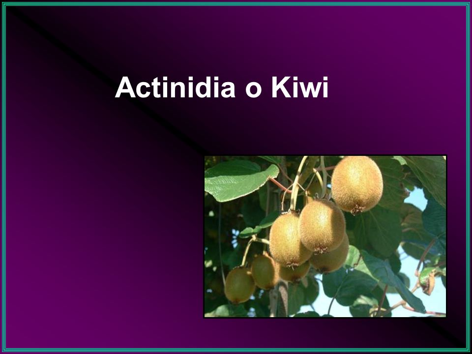 Accumulo di N nel frutto di kiwi Settimane dopo la fioritura