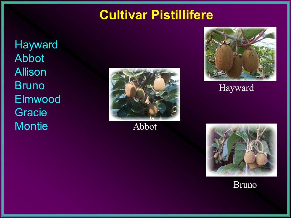 Cultivar Pistillifere Hayward Abbot Allison Bruno Elmwood Gracie Montie Hayward Abbot Bruno