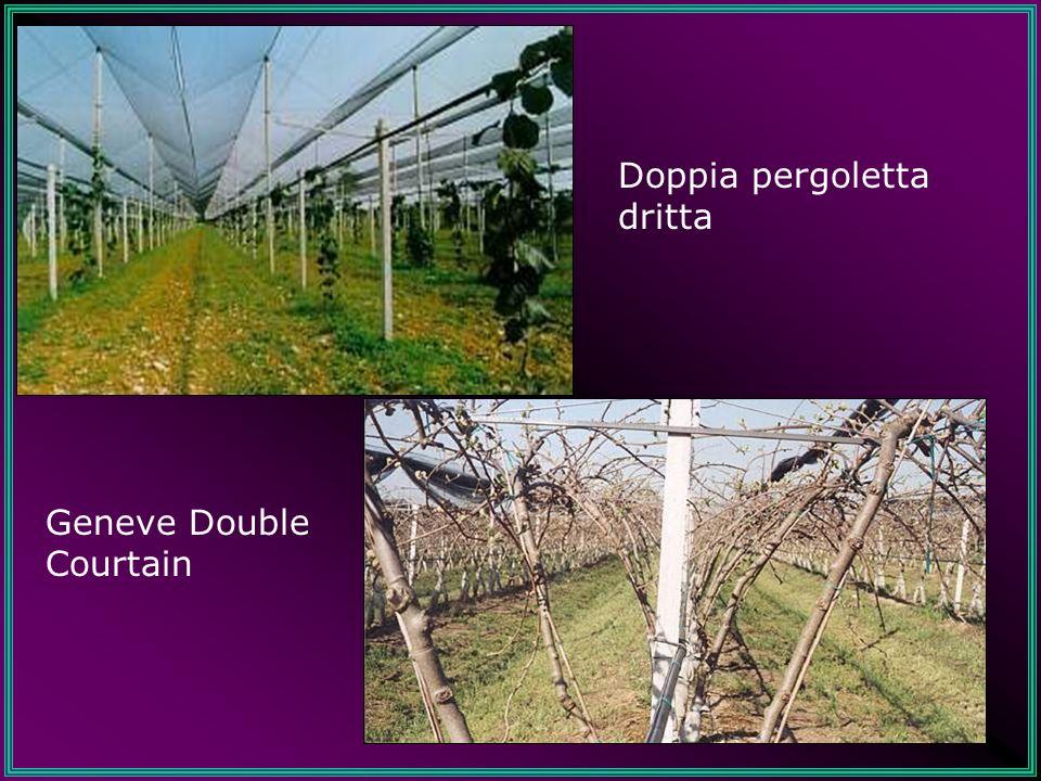 Geneve Double Courtain Doppia pergoletta dritta
