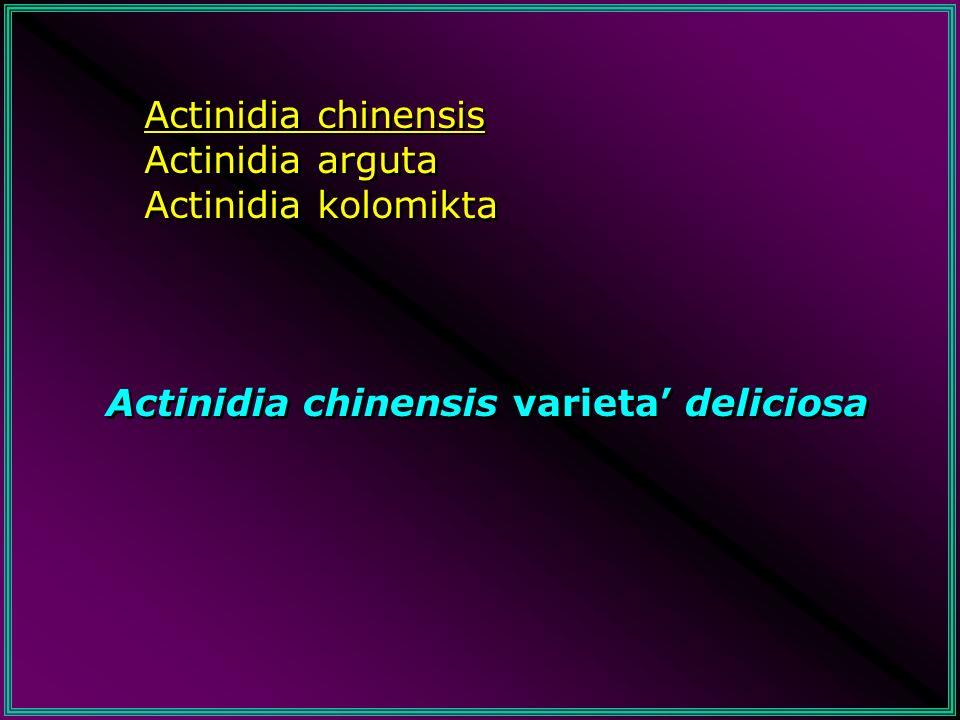 Lactinidia è originaria della Cina, dove cresce ancora allo stato spontaneo La diffusione nei paesi occidentali risale al 1850 In Italia le prime notizie risalgono al 1934 In Nuova Zelanda è arrivata nel 1904 e i primi frutti nel 1910