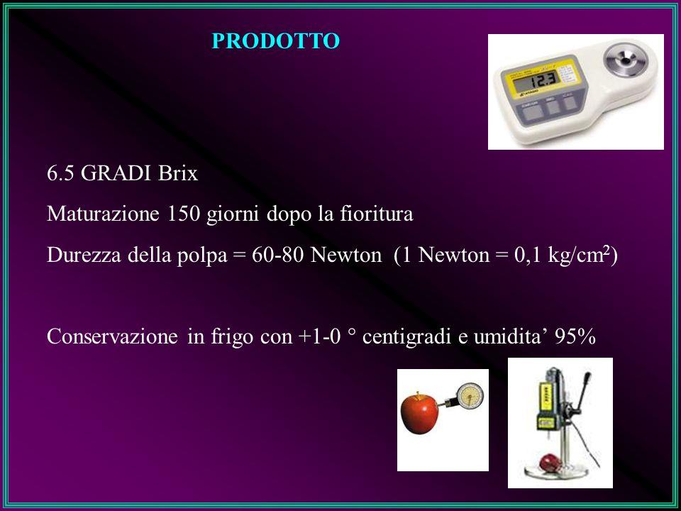 PRODOTTO 6.5 GRADI Brix Maturazione 150 giorni dopo la fioritura Durezza della polpa = 60-80 Newton (1 Newton = 0,1 kg/cm 2 ) Conservazione in frigo c