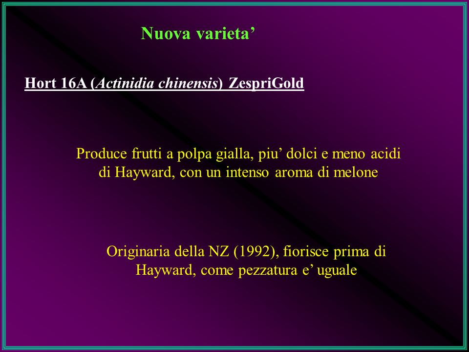 Nuova varieta Hort 16A (Actinidia chinensis) ZespriGold Produce frutti a polpa gialla, piu dolci e meno acidi di Hayward, con un intenso aroma di melo