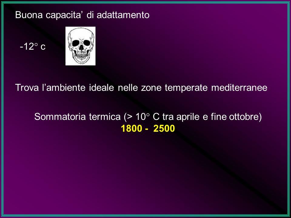 Buona capacita di adattamento -12° c Trova lambiente ideale nelle zone temperate mediterranee Sommatoria termica (> 10° C tra aprile e fine ottobre) 1