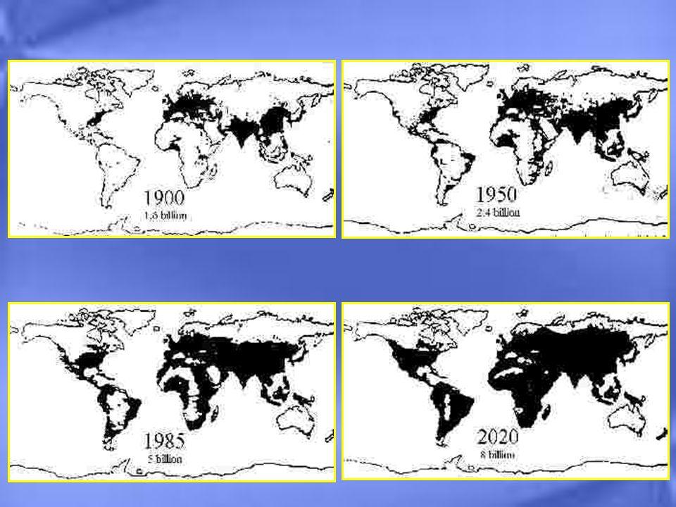 Asia e Africa aumenteranno la popolazione urbana a scapito dellAmerica Latina 20002025 AFRICA18 %20 % AMERICA LATINA 22 %15 % ASIA60 %65 % DISTRIBUZIONE DELLA POPOLAZIONE URBANA