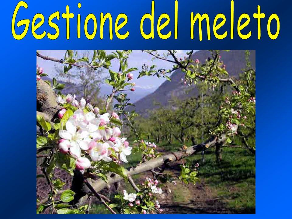 mg N/albero/giorno 0 0 50 100 150 200 250 300 350 1-apr 1-mag 1-giu 1-lug 1-ago 1-set 1-ott 0 0 2 2 4 4 6 6 8 8 10 12 14 - mg N-NO 3 /kg terreno Confronto tra lN apportato mediante fertirrigazione (mg N/ albero /giorno) e la disponibilità di N-NO 3 - nel terreno (1999) Confronto tra lN apportato mediante fertirrigazione (mg N/ albero /giorno) e la disponibilità di N-NO 3 - nel terreno (1999)