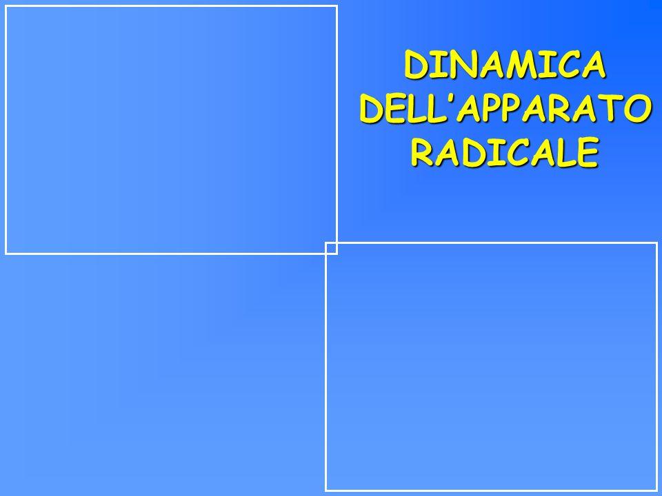 DINAMICA DELLAPPARATO RADICALE