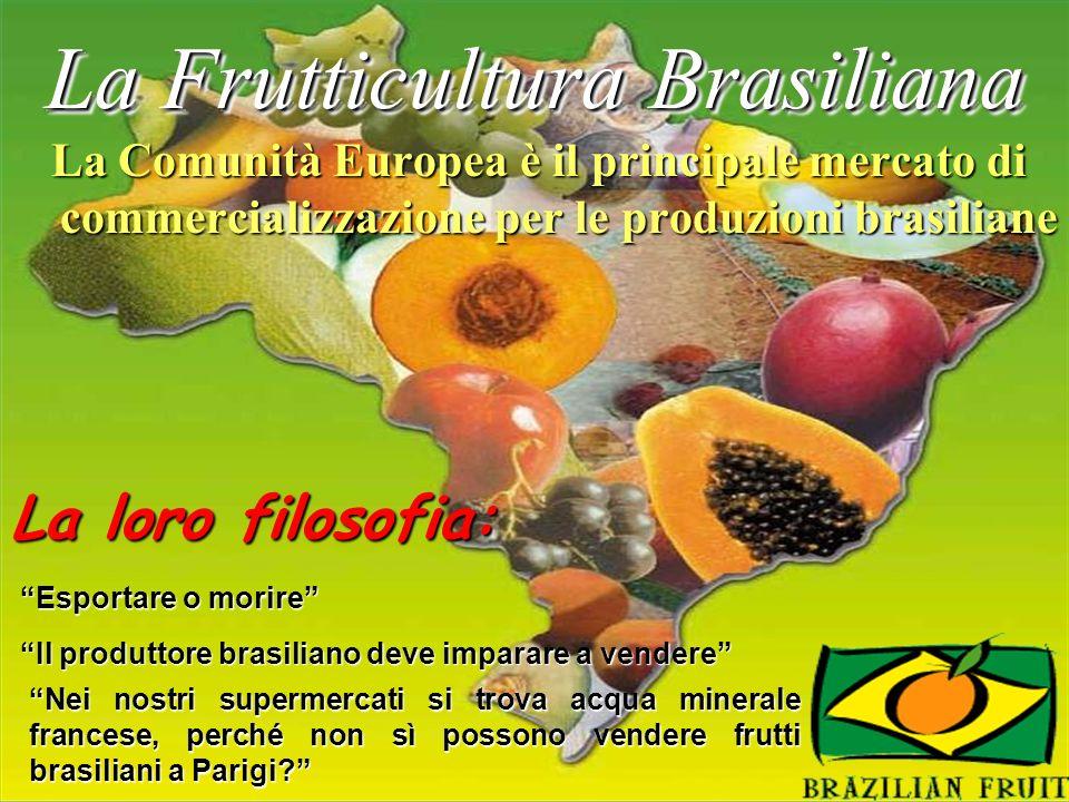 La Frutticultura Brasiliana La Comunità Europea è il principale mercato di commercializzazione per le produzioni brasiliane Nei nostri supermercati si