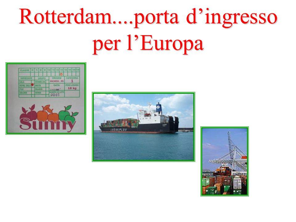Rotterdam....porta dingresso per lEuropa
