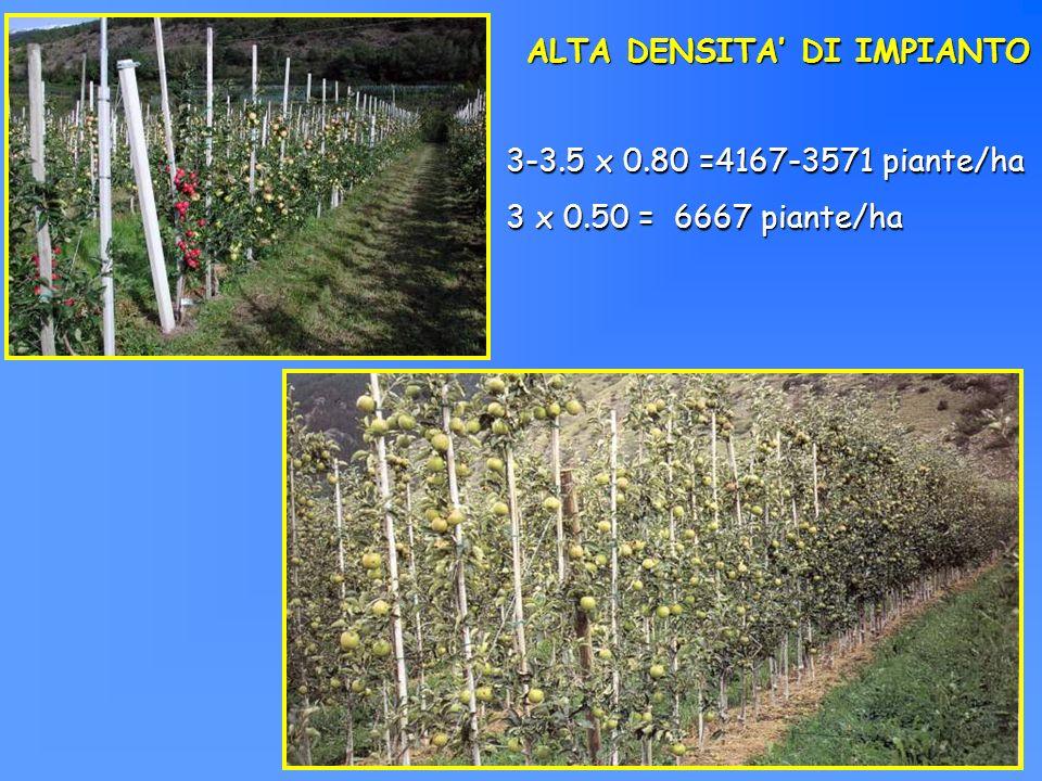 ALTA DENSITA DI IMPIANTO 3-3.5 x 0.80 =4167-3571 piante/ha 3 x 0.50 = 6667 piante/ha