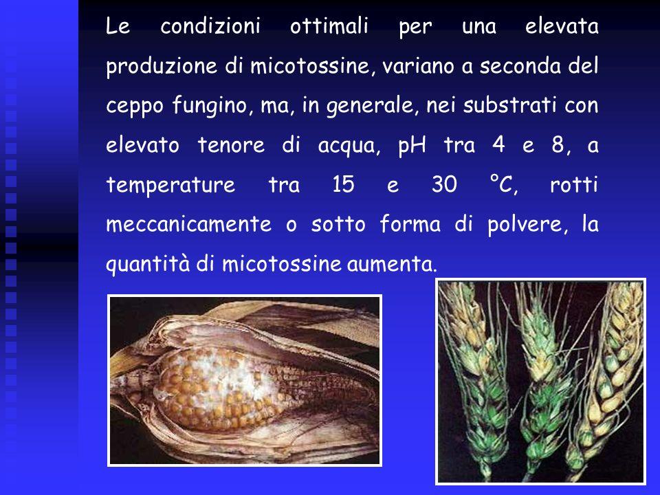 Le condizioni ottimali per una elevata produzione di micotossine, variano a seconda del ceppo fungino, ma, in generale, nei substrati con elevato teno