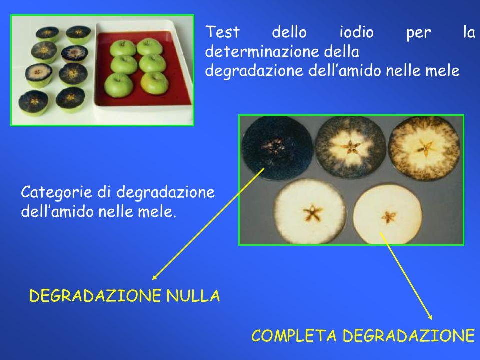 Andamento della durezza rilevato al banco di vendita di pere italiane (Abate Fetel) sottoposte a maturazione controllata