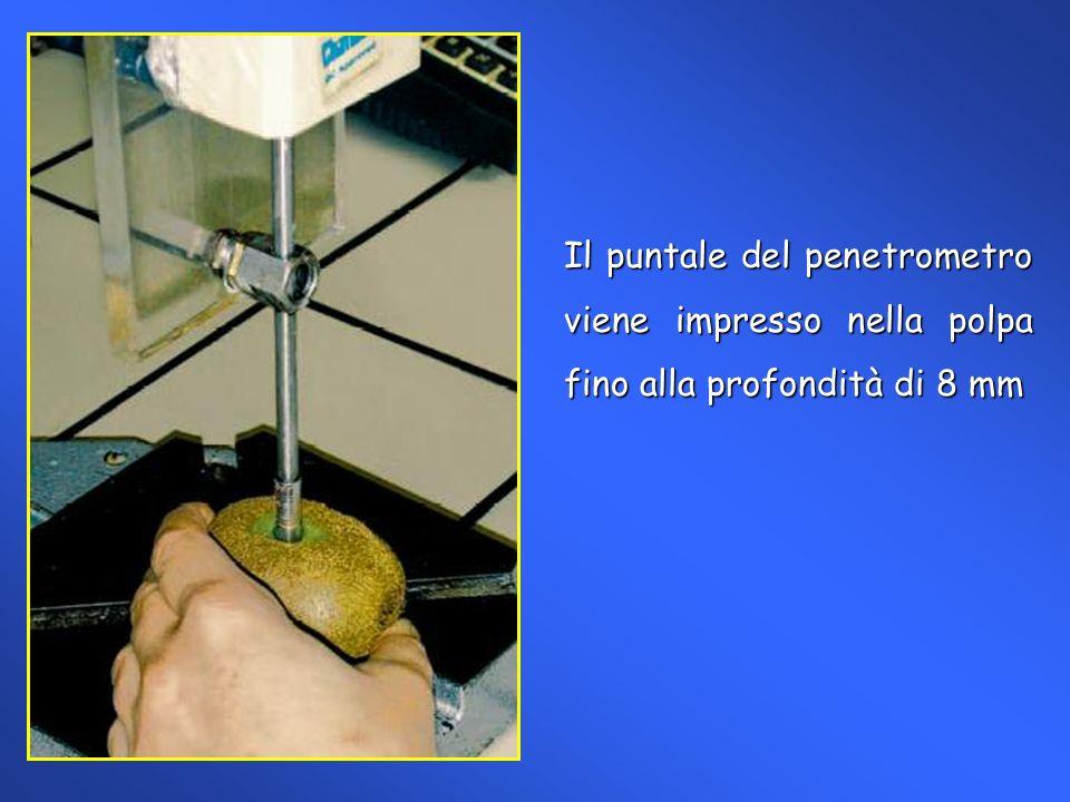 Determinazione del residuo secco rifrattometrico (rifrattometro ATAGO).